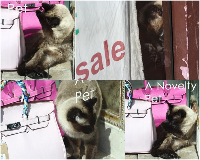 cats4-1.jpg